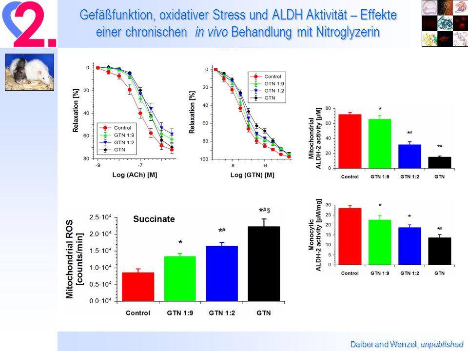 Gefäßfunktion, oxidativer Stress und ALDH Aktivität – Effekte einer chronischen in vivo Behandlung mit Nitroglyzerin