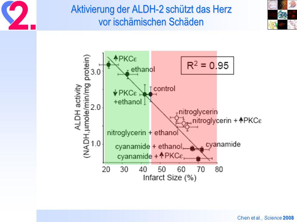 Aktivierung der ALDH-2 schützt das Herz vor ischämischen Schäden