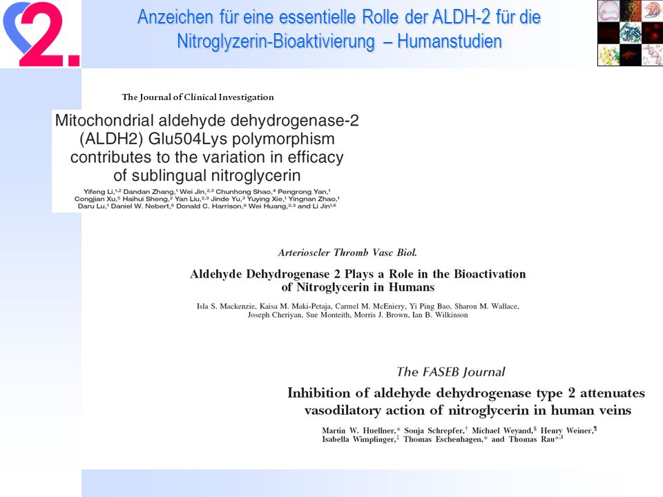 Anzeichen für eine essentielle Rolle der ALDH-2 für die Nitroglyzerin-Bioaktivierung – Humanstudien