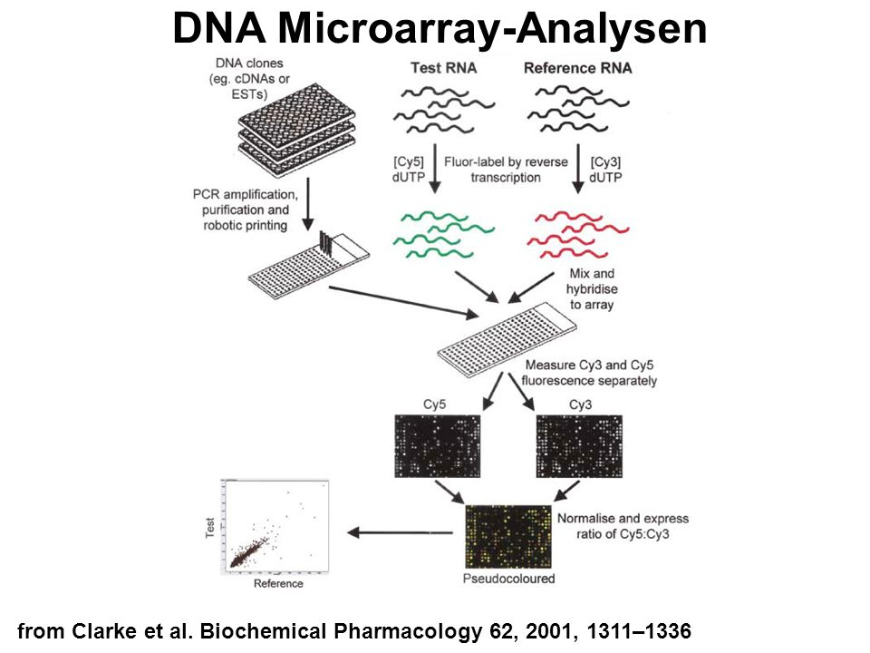 DNA Microarray-Analysen