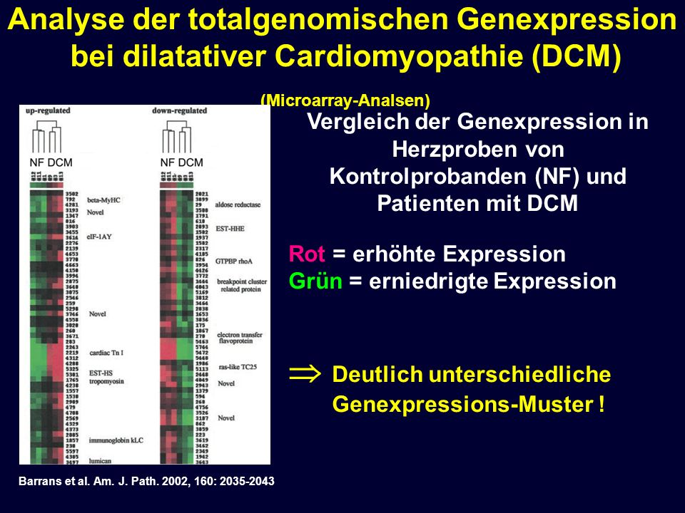  Deutlich unterschiedliche Genexpressions-Muster !