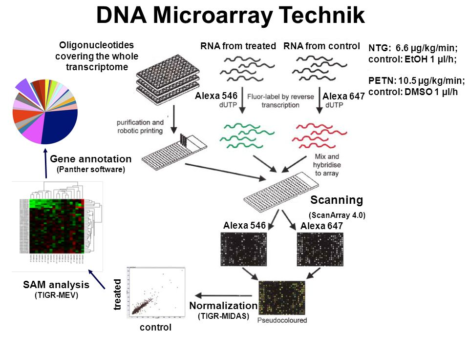 DNA Microarray Technik