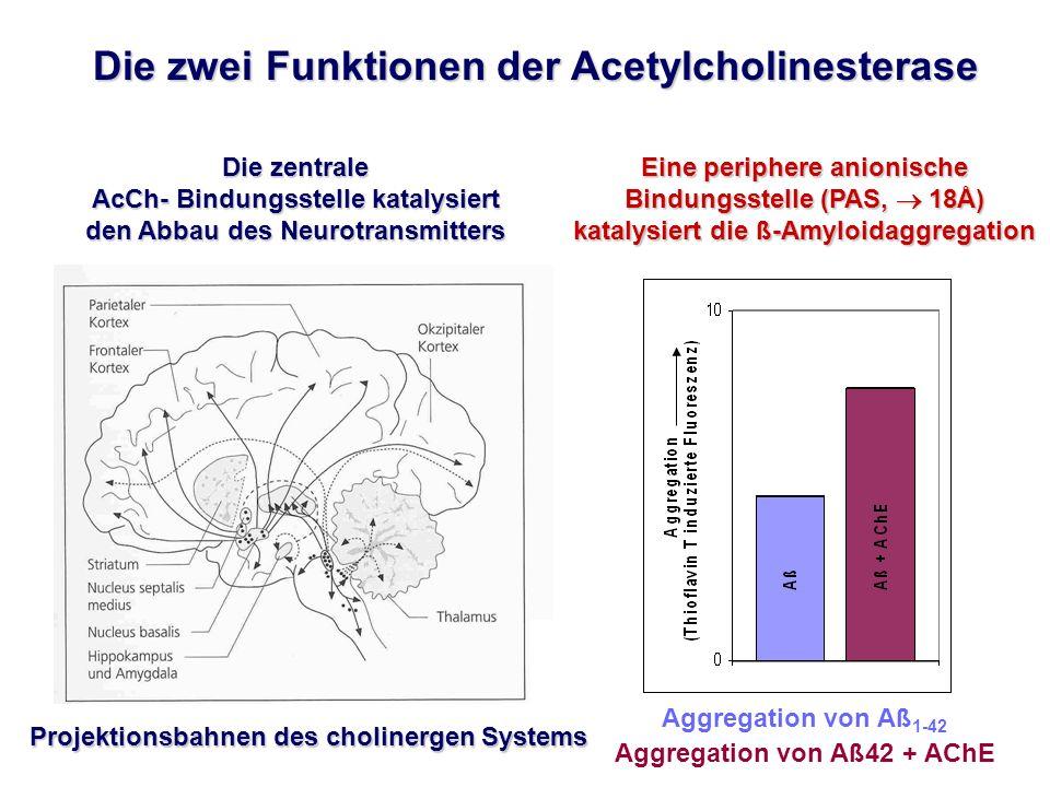 Aggregation von Aß1-42 Aggregation von Aß42 + AChE