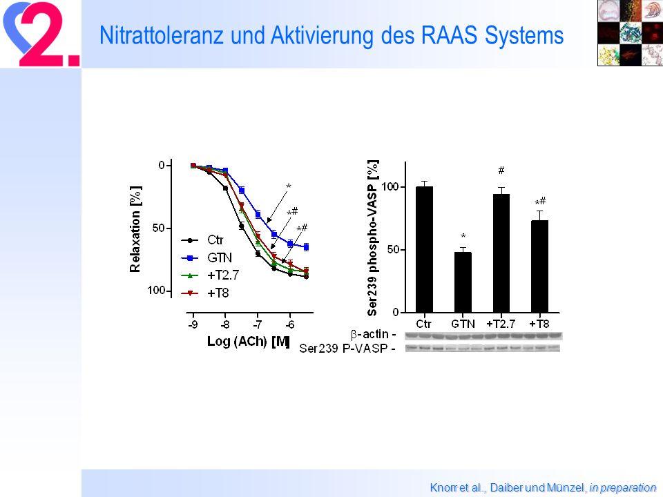 Nitrattoleranz und Aktivierung des RAAS Systems