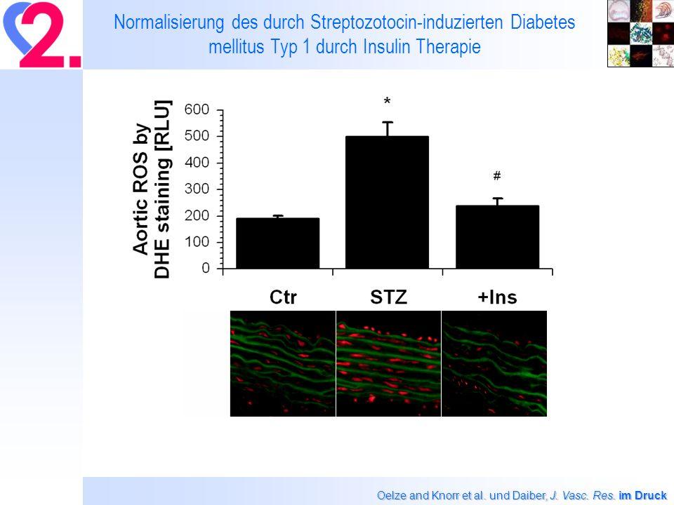 Normalisierung des durch Streptozotocin-induzierten Diabetes mellitus Typ 1 durch Insulin Therapie