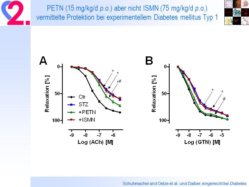 PETN (15 mg/kg/d p. o. ) aber nicht ISMN (75 mg/kg/d p. o