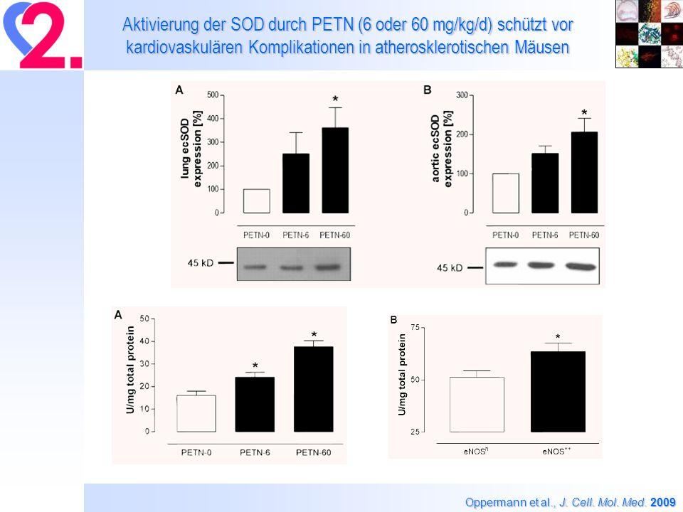 Aktivierung der SOD durch PETN (6 oder 60 mg/kg/d) schützt vor kardiovaskulären Komplikationen in atherosklerotischen Mäusen