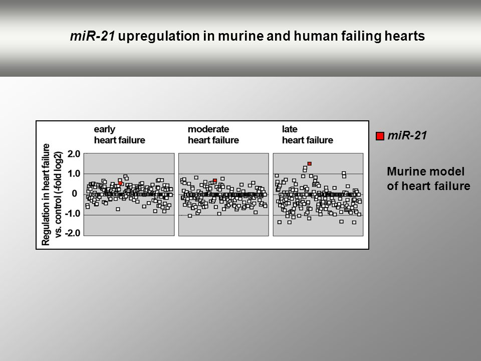 miR-21 upregulation in murine and human failing hearts