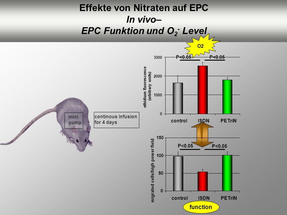 Effekte von Nitraten auf EPC EPC Funktion und O2- Level