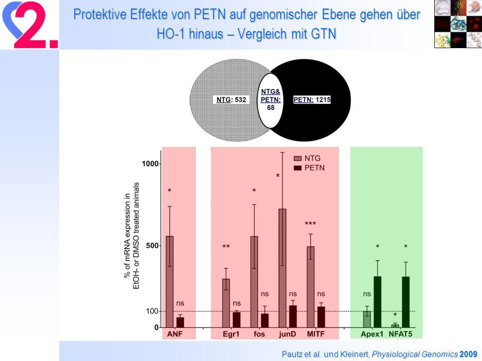 Protektive Effekte von PETN auf genomischer Ebene gehen über HO-1 hinaus – Vergleich mit GTN