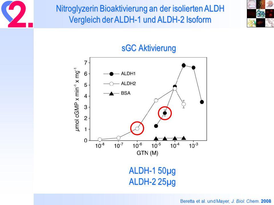 Nitroglyzerin Bioaktivierung an der isolierten ALDH