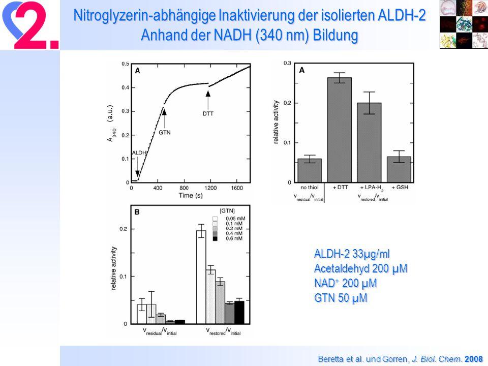 Nitroglyzerin-abhängige Inaktivierung der isolierten ALDH-2