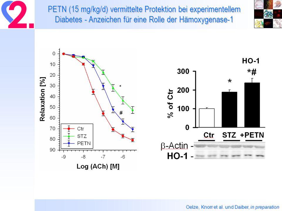 PETN (15 mg/kg/d) vermittelte Protektion bei experimentellem