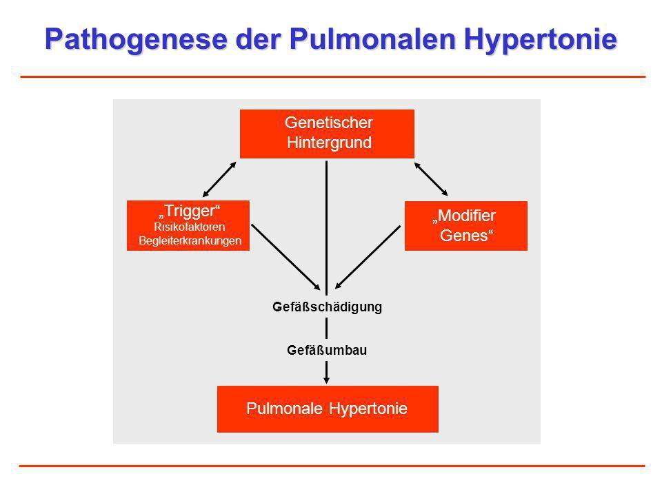Pathogenese der Pulmonalen Hypertonie