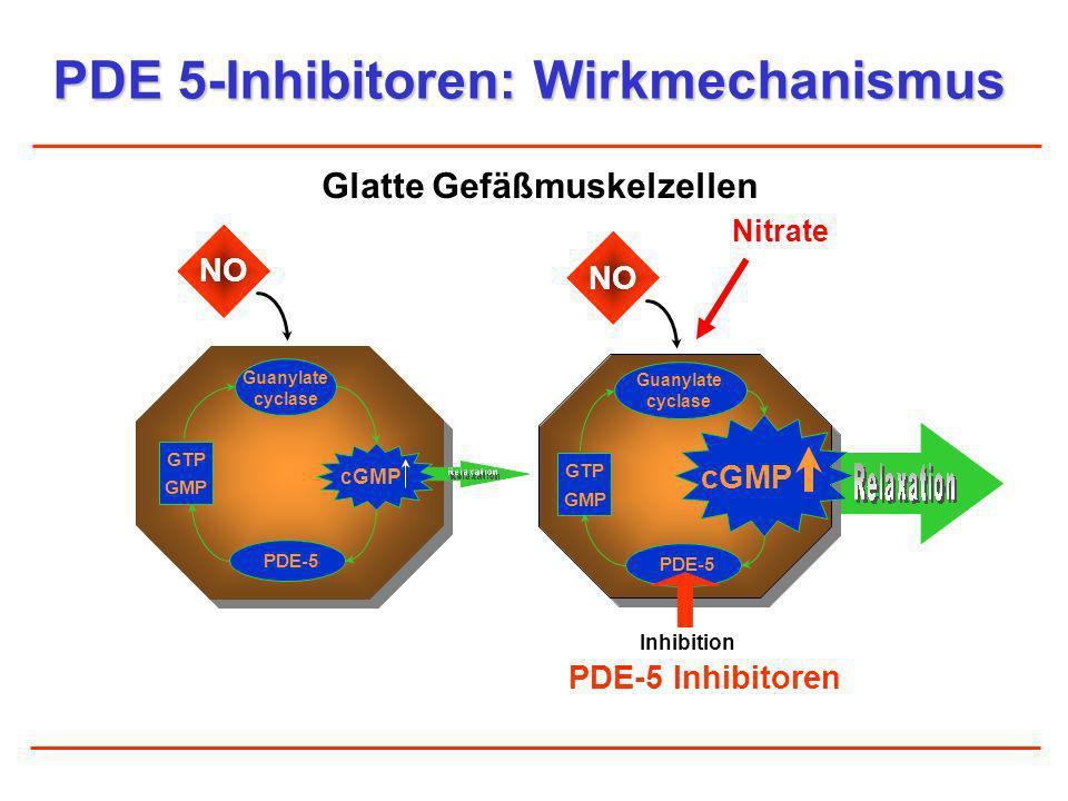 PDE 5-Inhibitoren: Wirkmechanismus Glatte Gefäßmuskelzellen