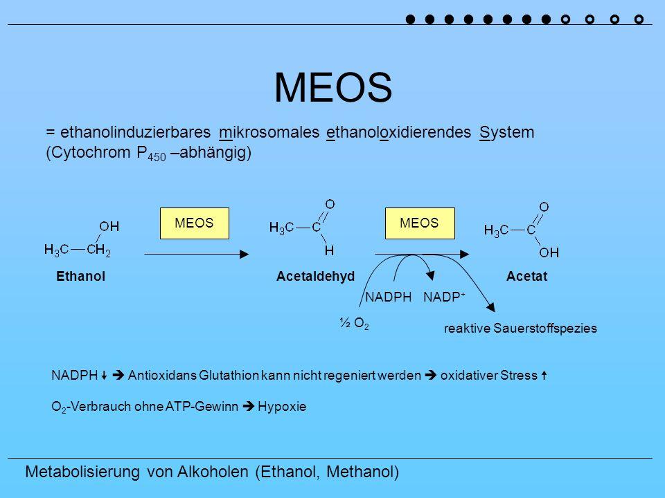 MEOS = ethanolinduzierbares mikrosomales ethanoloxidierendes System