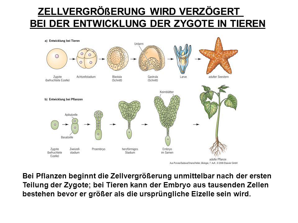 Schön Was Anatomie Pflanze Zeitgenössisch - Anatomie Ideen - finotti ...