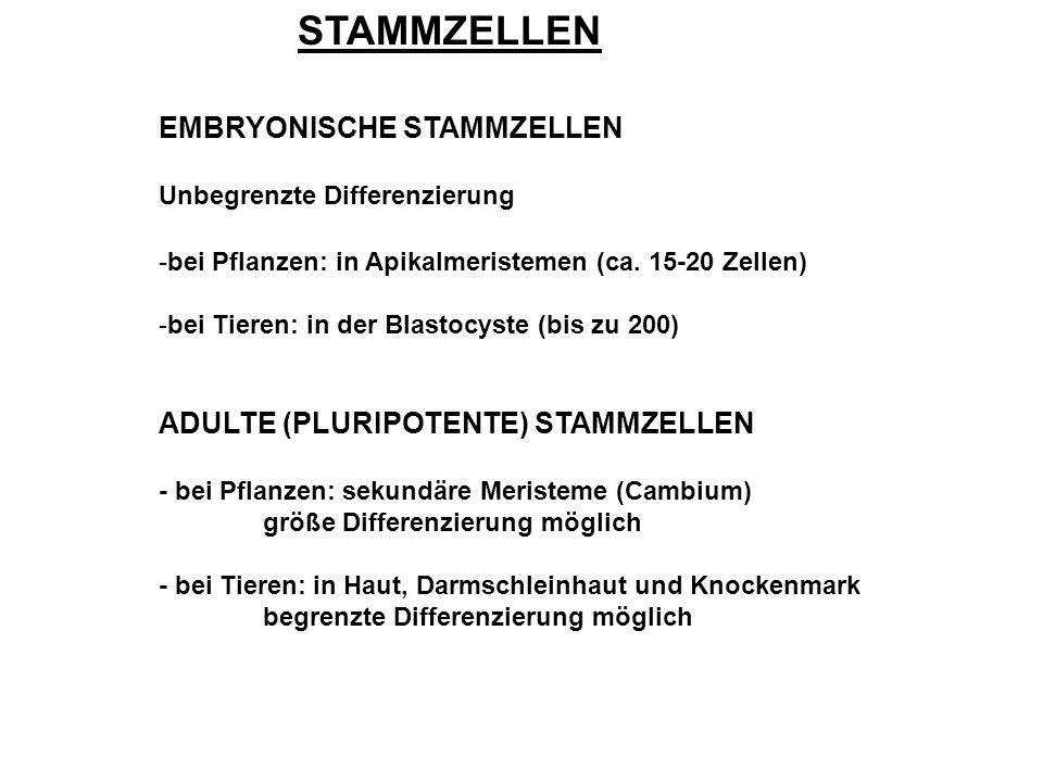 STAMMZELLEN EMBRYONISCHE STAMMZELLEN ADULTE (PLURIPOTENTE) STAMMZELLEN