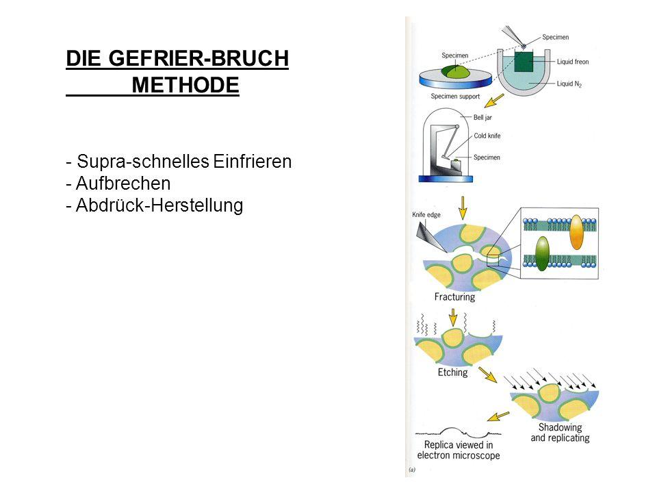 DIE GEFRIER-BRUCH METHODE - Supra-schnelles Einfrieren - Aufbrechen