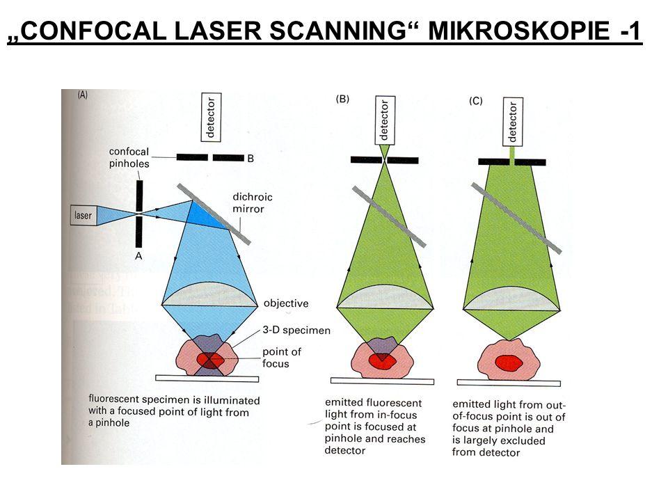 """""""CONFOCAL LASER SCANNING MIKROSKOPIE -1"""