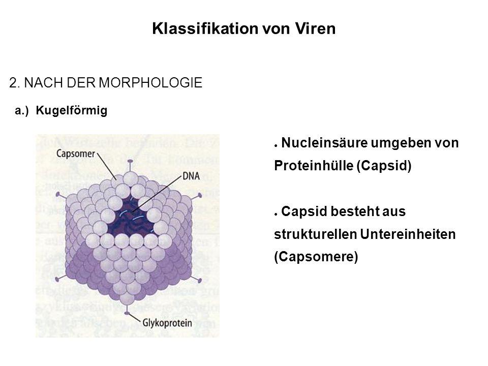 Klassifikation von Viren