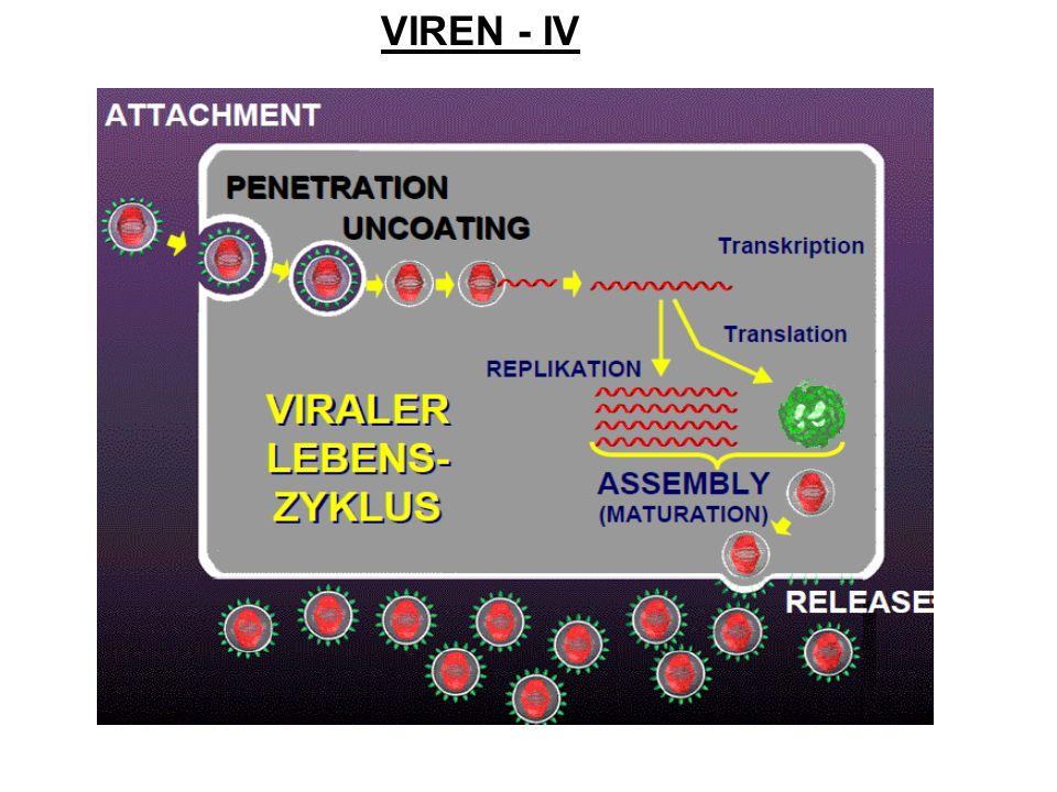 VIREN - IV