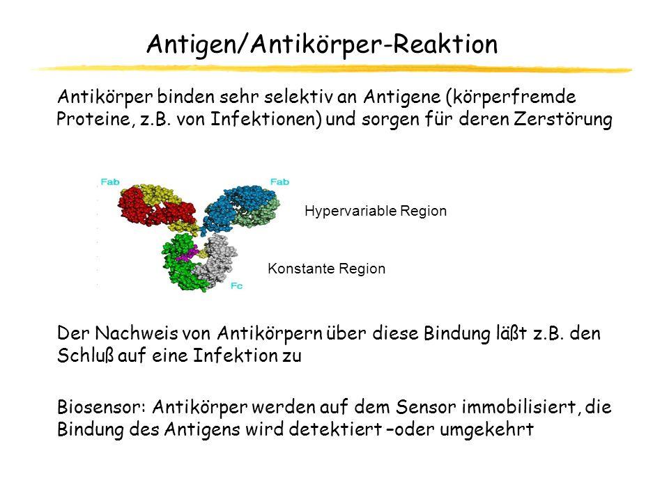 Antigen/Antikörper-Reaktion