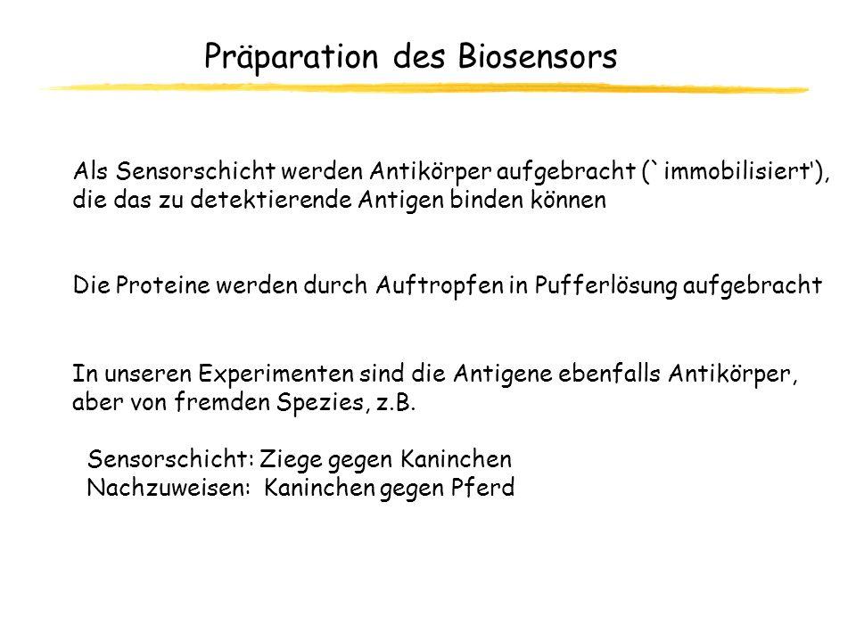 Präparation des Biosensors