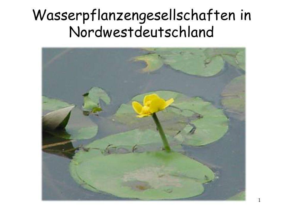 Wasserpflanzengesellschaften in Nordwestdeutschland