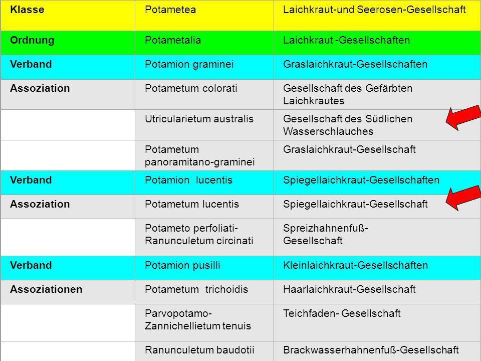 Laichkraut-und Seerosen-Gesellschaft