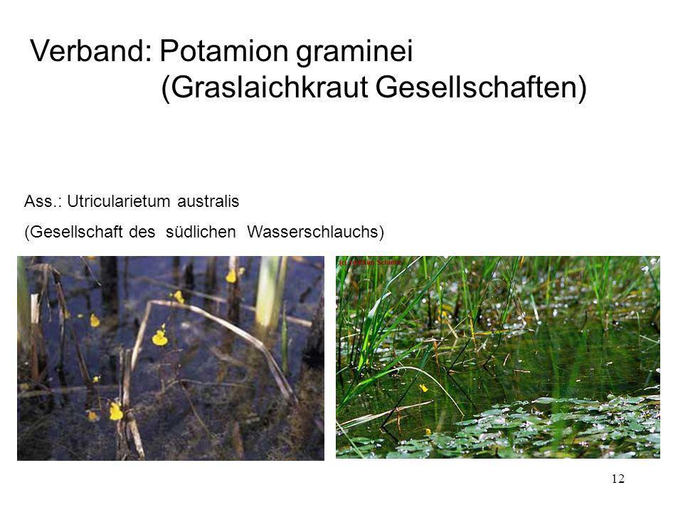 Verband: Potamion graminei (Graslaichkraut Gesellschaften)