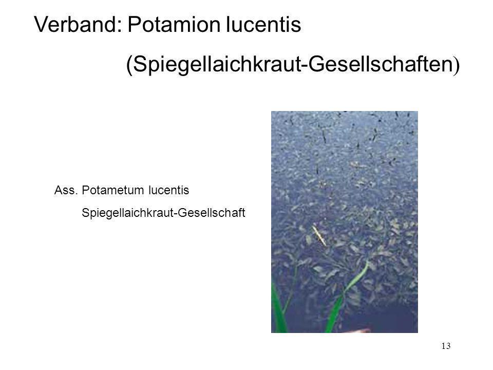 Verband: Potamion lucentis (Spiegellaichkraut-Gesellschaften)