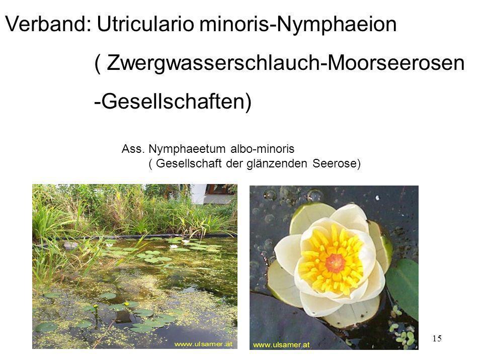 Verband: Utriculario minoris-Nymphaeion