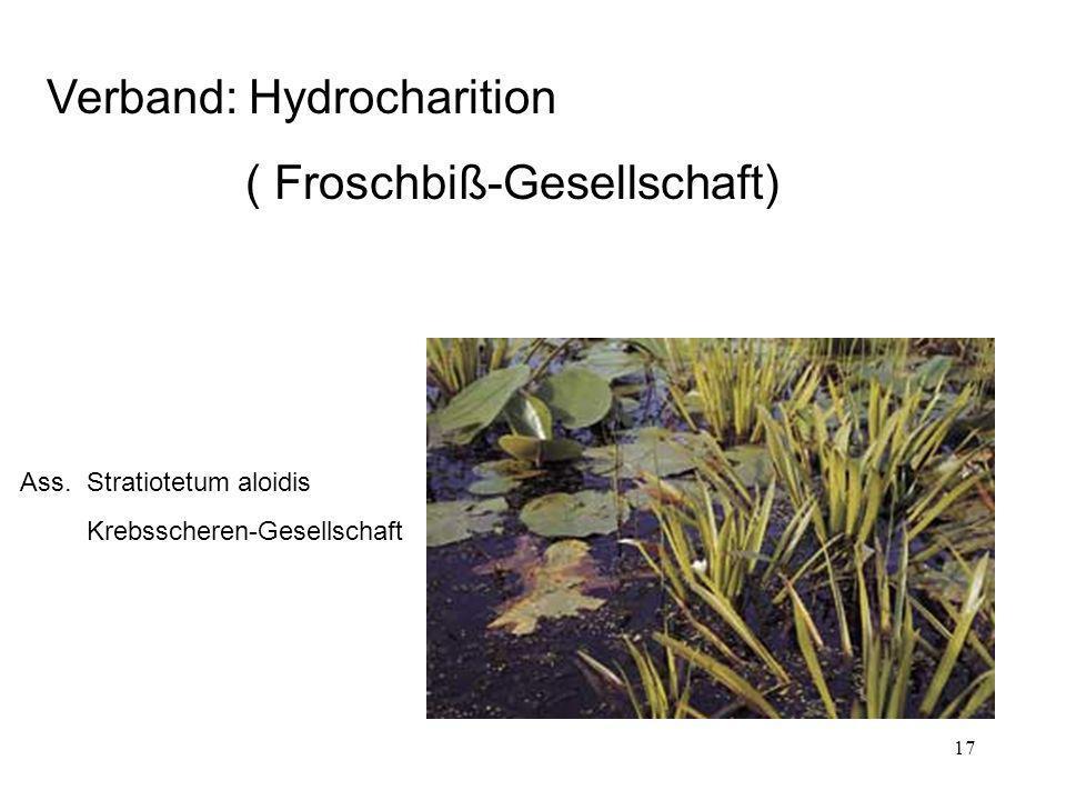 Verband: Hydrocharition ( Froschbiß-Gesellschaft)