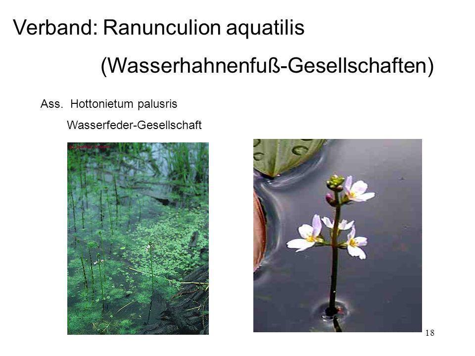 Verband: Ranunculion aquatilis (Wasserhahnenfuß-Gesellschaften)