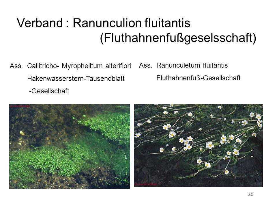 Verband : Ranunculion fluitantis (Fluthahnenfußgeselsschaft)