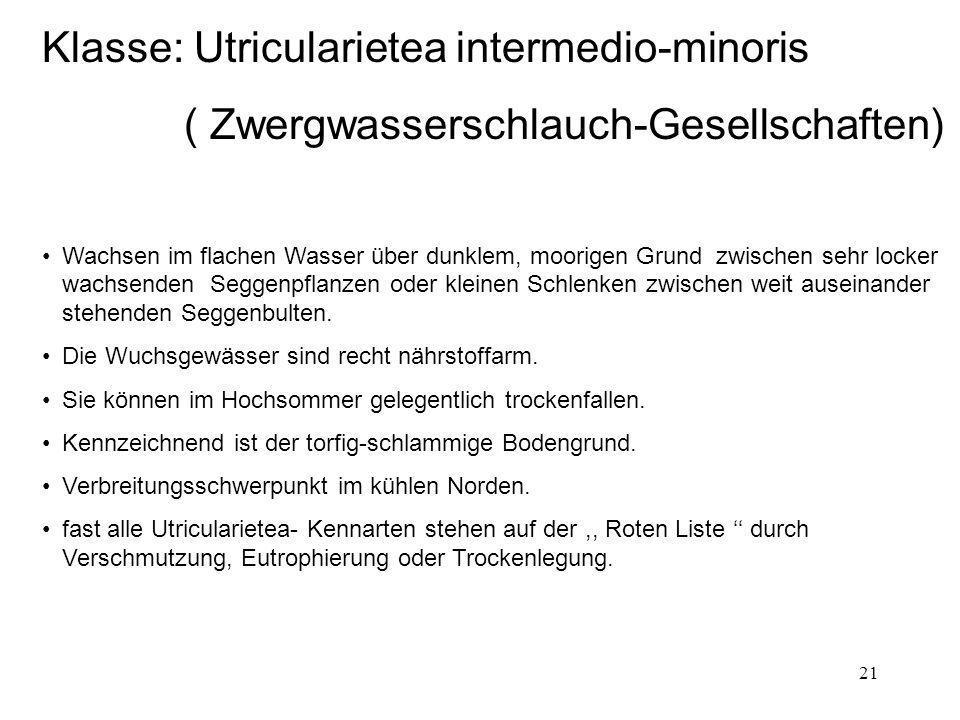 Klasse: Utricularietea intermedio-minoris