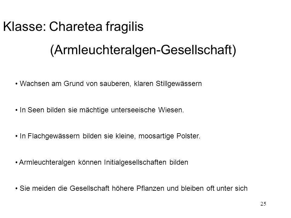 Klasse: Charetea fragilis (Armleuchteralgen-Gesellschaft)