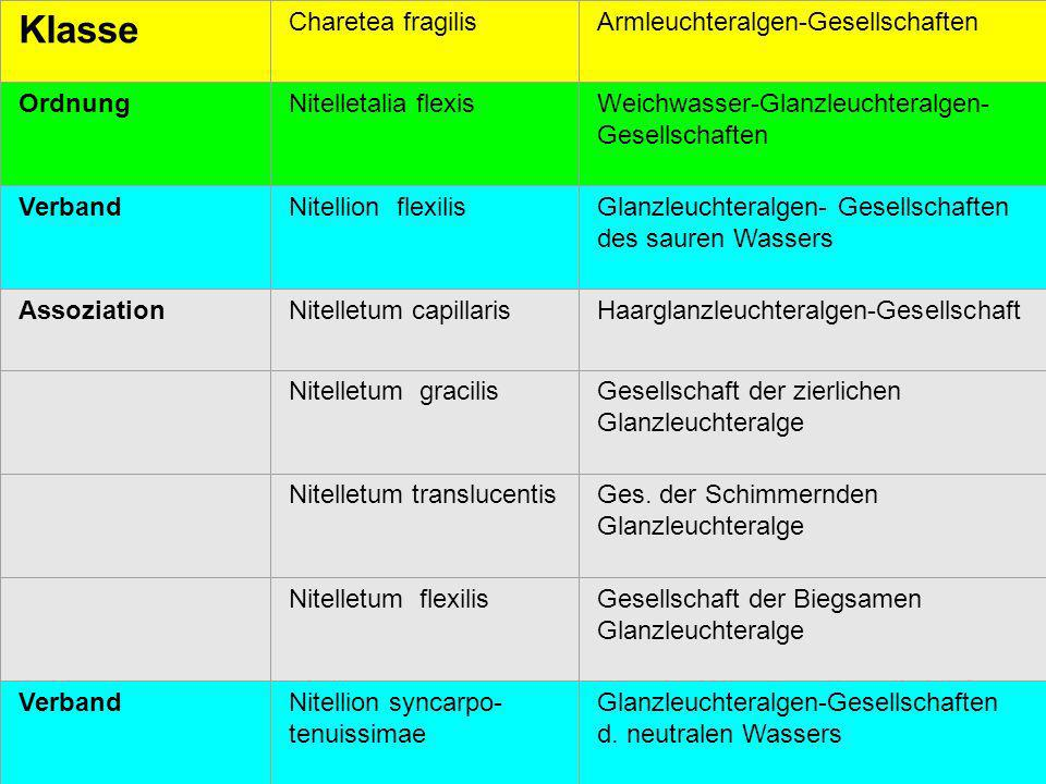 Klasse Charetea fragilis Armleuchteralgen-Gesellschaften Ordnung