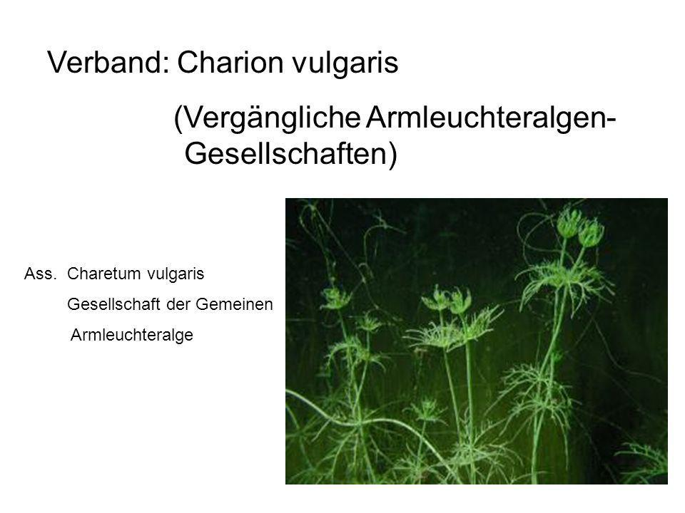 Verband: Charion vulgaris