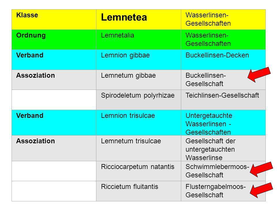 Lemnetea Klasse Wasserlinsen-Gesellschaften Ordnung Lemnetalia Verband