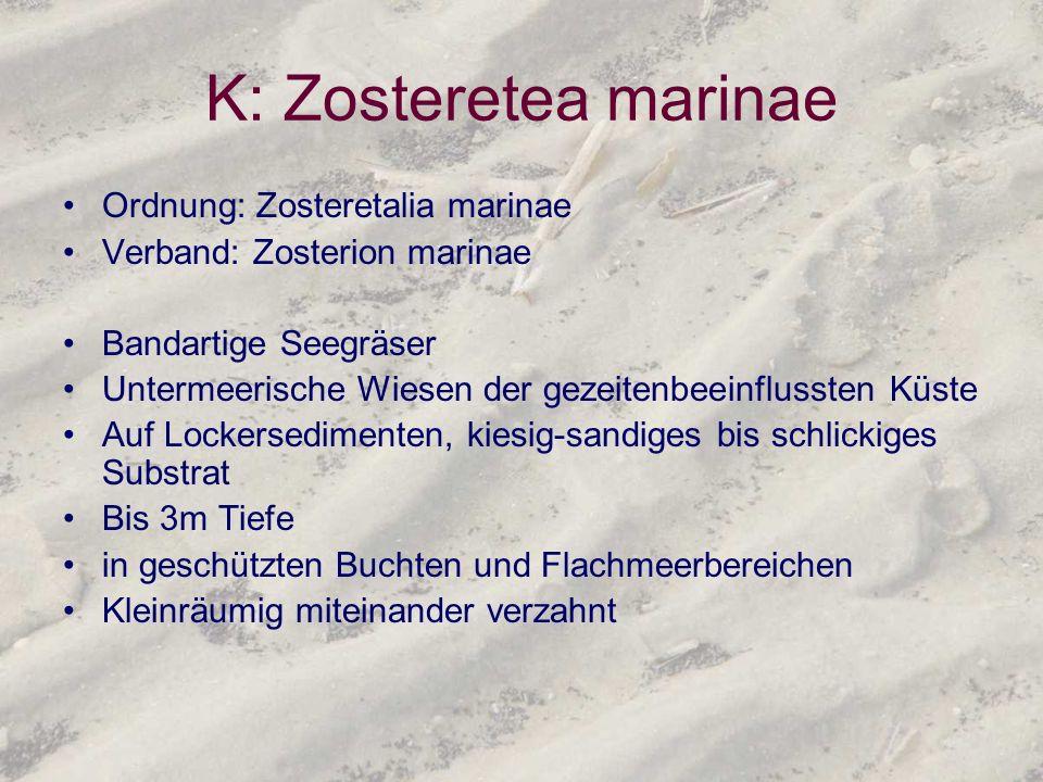 K: Zosteretea marinae Ordnung: Zosteretalia marinae