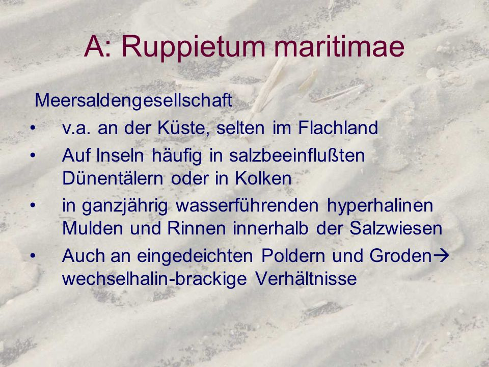 A: Ruppietum maritimae