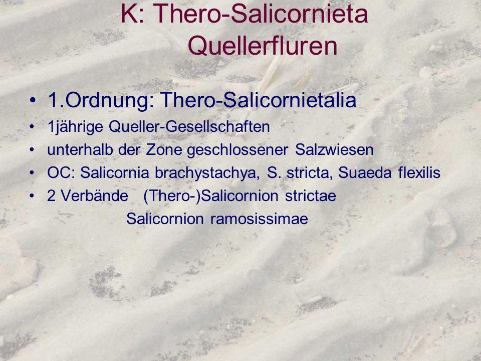 K: Thero-Salicornieta Quellerfluren