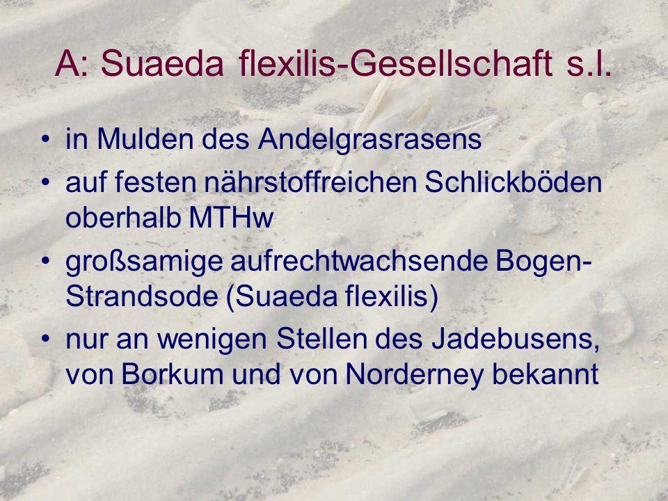 A: Suaeda flexilis-Gesellschaft s.l.