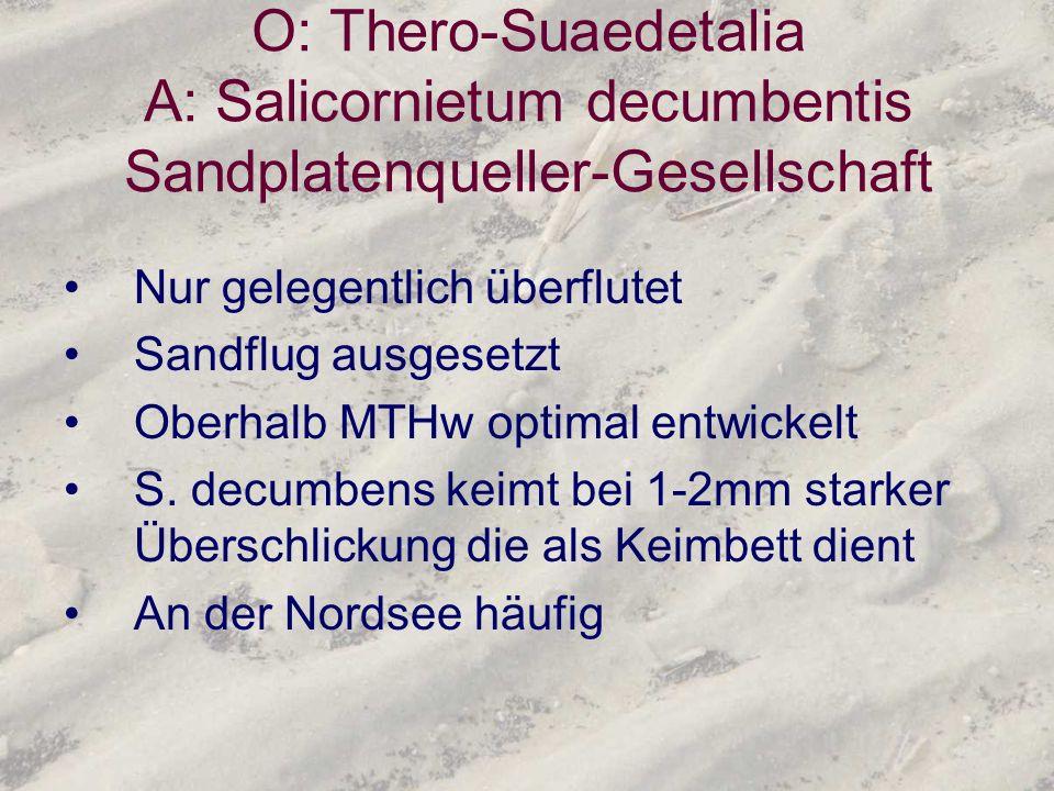 O: Thero-Suaedetalia A: Salicornietum decumbentis Sandplatenqueller-Gesellschaft