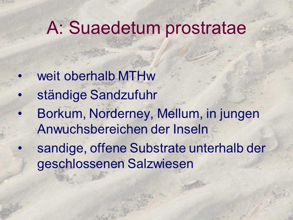 A: Suaedetum prostratae