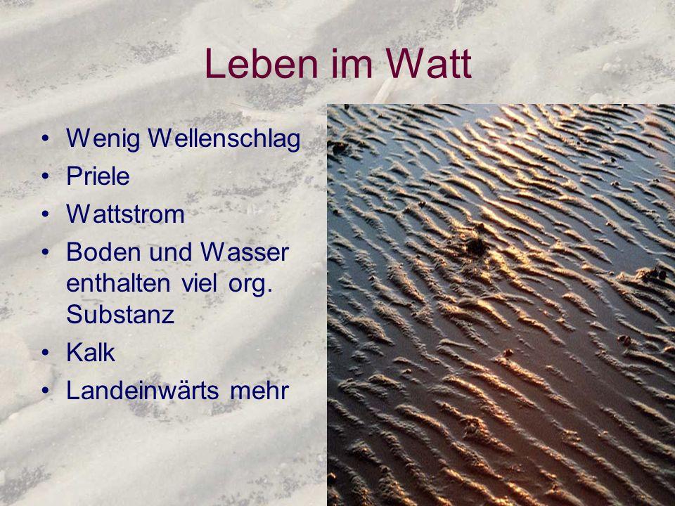 Leben im Watt Wenig Wellenschlag Priele Wattstrom