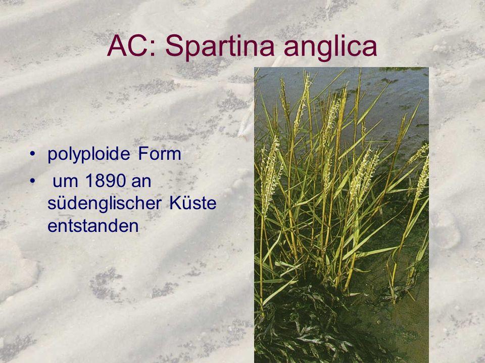 AC: Spartina anglica polyploide Form