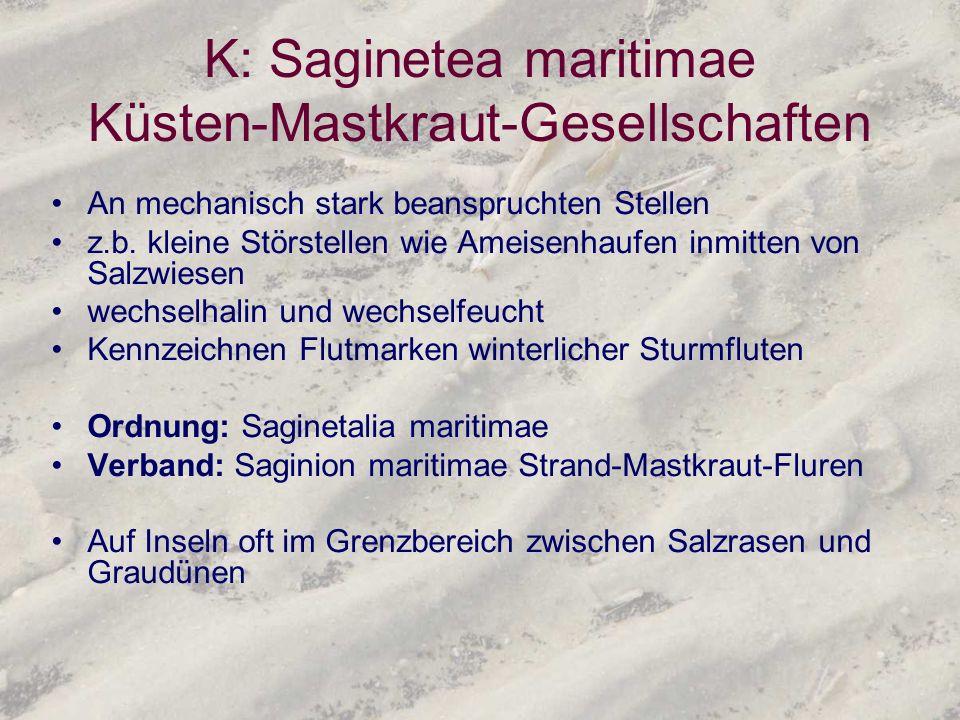 K: Saginetea maritimae Küsten-Mastkraut-Gesellschaften